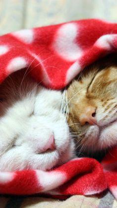 awwwww....kitty love