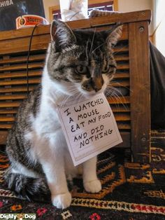 An epic gallery of cat shaming pictures that prove these cats are the naughtiest in the world. A hilarious cat shaming picture gallery. Cat Shaming, Public Shaming, I Love Cats, Crazy Cats, Cute Cats, Funny Animal Pictures, Funny Animals, Cute Animals, Funny Photos
