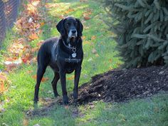 Mike, Lab/Pointer | by The art of nature ..one breath at a time