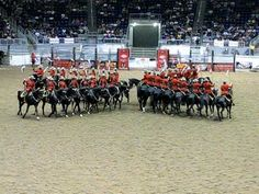 Royal Canadian Mounted Police musical ride performance