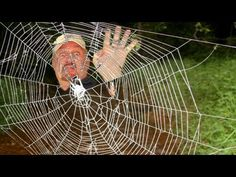 WORLD'S STRONGEST SPIDER WEB - YouTube