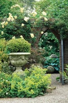 Lovely soft yellow rosea banksia arch & surrounded by soft green and cream lady's mantle, a gorgeous combination.