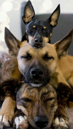 Rare Animals, Animals And Pets, Funny Animals, Cute Cats And Dogs, Cute Dogs And Puppies, Doggies, Amor Animal, Mundo Animal, Dog Pictures