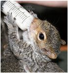 I will have a baby Squirrel one day.