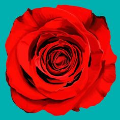 In love with this gorgeous pop art red rose!