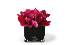 Hervé Gambs Topiary Orchid in Fuschia Pink. Available to purchase in an assortment of colour hues at 56 Merrion Square.