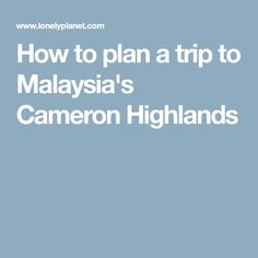How to plan a trip to Malaysia's Cameron Highlands