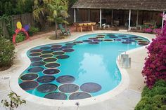 Heat Your Pool Naturally With These Lily Pads