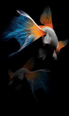 """Search Results for """"mobile wallpapers for htc desire – Adorable Wallpapers Fish Wallpaper Iphone, Space Phone Wallpaper, Samsung Galaxy Wallpaper, Bird Wallpaper, Apple Wallpaper, Colorful Wallpaper, Mobile Wallpaper, Wallpaper Backgrounds, Best Wallpapers Android"""