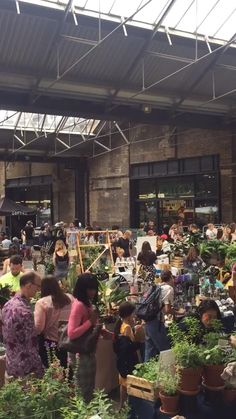 Throwback to July 2019 when we could host our wonderfully jungly events Garden Plants, House Plants, Market Displays, Green Rooms, Foliage Plants, Hanging Plants, Florals, Succulents, Gardens
