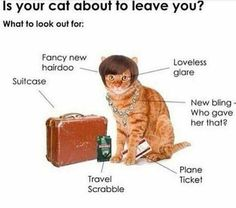 Is your cat going to leave you? Heed the telltale signs.  #cat #leave #bnrbc #barksnrecbc