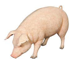 Fibreglass Fat Pig Statue Dimensions : Length : 128cm, Widht : 50cm, Height : 80cm, Weight : 15kg
