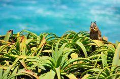beach squirrel