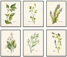 Botanical Beauties--scroll to bottom of post for botanical print resources