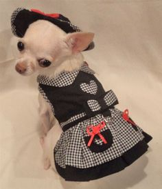 My Heart Dog Harness Dress 4 Piece Set includes Dress Hat and Leash and Panties Chihuahua Clothes, Chihuahua Love, Small Dog Clothes, Pet Clothes, Dog Clothing, Yorkie Dogs, Puppies, Chihuahuas, Puppy Kennel