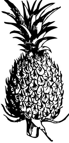 Pineapple Black White Line Art Coloring Book Colouring 555px.png