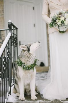 Make your dearest friend be in your wedding: her husky feels great in your winter wedding too