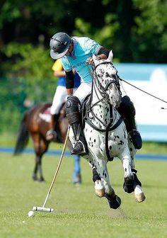 Anyone up for a chukkar of polo?