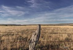 Sneezewood poles and a barbed wire fence enclose a cattle feeding camp on the Norwood Farm. Barbed Wire Fencing, Wire Fence, South African Art, Cattle, Beauty And The Beast, The Past, Fence Posts, Windmills, Rustic