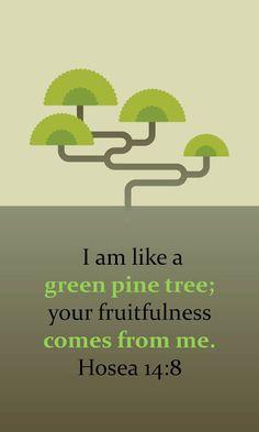 {Hosea 14:8} Fruitfullness comes from God