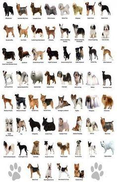 Small Dog Breeds Chart - Jaddid - Hd Wallpapers, Backgrounds on Amazing Dog Photo Ideas 3662 Small Dog Breeds Chart, Dog Chart, Types Of Dogs Breeds, Best Dog Breeds, Large Dog Breeds, Puppy Breeds, Large Dogs, Small Dogs, Best Dogs