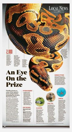 An Eye on the PrizeDesigner Grace Stamper helped illustrate this story by Cody Hills with this eye-catching page about hunting invasive species in Florida. In addition to pythons, the state also encourages the capture of lionfish (which have no...