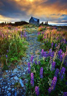 by Michaelthien~ Lake Tekapo, New Zealand