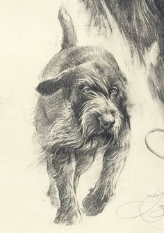 Tedesco a pelo duro. Cacciafirmato stampa da Valery | Etsy Grouse Hunting, German Wirehaired Pointer, Dog Haircuts, Types Of Dogs, Grandparents Day, Vizsla, Dog Art, My Images, Cute Dogs