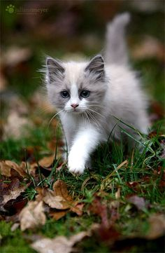 Here are 20 adorable kittens to help you master the day - Katzen Bilder - Gatos Kittens And Puppies, Cute Cats And Kittens, Kittens Cutest, Puppies Gif, I Love Cats, Dachshund Puppies, Pretty Cats, Beautiful Cats, Animals Beautiful