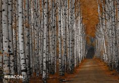 The Enchanting Colors of Aspen Alley