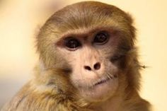 Where to buy monkey.