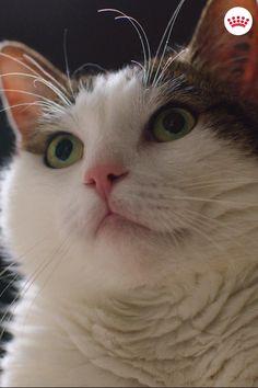 Katsotko joskus lemmikkiäsi ja mietit onko se ylipainoinen? Klikkaa linkkiä saadaksesi lisätietoja lemmikkien ylipainosta. Orange Is The New Black, Really Funny, Star Fashion, Dog Cat, Cute Animals, Pets, Loyalty, Random, Heart