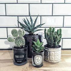 Le bois, les cactus, les feuilles de Monstera… la tendance tropicale m'a t… Decoration Cactus, Decoration Plante, Cactus Pot, Cactus Flower, Flower Bookey, Flower Film, Flower Pots, Cacti And Succulents, Cactus Plants