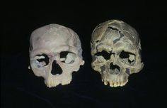 """@NHM_London #FossilFriday Early sapiens (replicas) Jebel Irhoud 1 (left) and Qafzeh 6 (right)"""