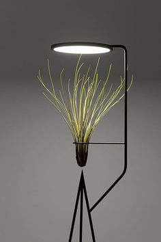 viride by goula figuera combines the capability of transforming interiors with light and decorative plants in a new typology of object containing both. Interior Lighting, Modern Lighting, Lighting Design, Custom Lighting, Lighting Ideas, Black Floor Lamp, Modern Floor Lamps, Black Lamps, Deco Cafe