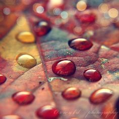 beautiful, color, drops, leaf