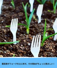 organic gardening tips Articles Organic Fertilizer, Organic Gardening, Gardening Tips, Garden Fertilizers, Gardening Gloves, Indoor Gardening, Vegetable Gardening, Natural Garden, Natural Herbs
