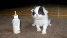 Panda the Kitten Saved from the Rain, Then and Now!