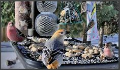 At your desk? You can still watch birds at the feeder! Click to visit our BirdCams. | Cornell Lab of Ornithology