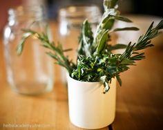 Herbs for Cold Season