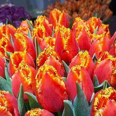 Novinka z výstavy  #kvetysilvia #kvetinarstvo #kvety #svadba #love #instagood #cute #follow #photooftheday #beautiful #tagsforlikes #happy #like4like #nature #style #nofilter #pretty #flowers #design #awesome #wedding #home #handmade #flower #summer #bride #weddingday #floral #naturelovers #picoftheday