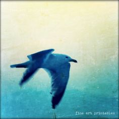 Download Printable art photo 5x5'' flying by fineartprintables, $2.00