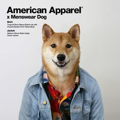 #30 Menswear Dog (Litterally the Best Thing on Instagram)