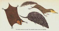 Charlie Harper Hedgehog and Shrew
