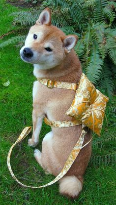 Ring Bearer Wedding Harness for X-large or large sized dogs, your choice from 24 silk brocade patterns. $105.00, via Etsy.