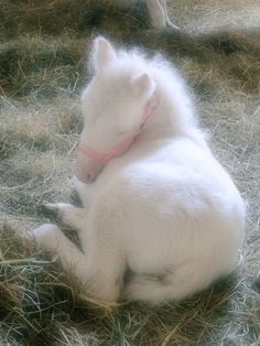 Beatiful baby foal so cute Most Beautiful Horses, Pretty Horses, Horse Love, Animals Beautiful, Cute Little Animals, Cute Funny Animals, Baby Animals Pictures, Animals And Pets, Farm Animals