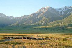 Aksu-Zhabagly: South Kazakhstan   Doğu Türkistan/Aksu Bölgesi Eastern Türkistan/Aksu Region دوغو تورکیستان آکسو بولگه سی