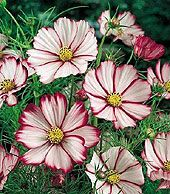 25 flowering plants that will thrive in Texas heat.