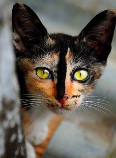 Orange and Black Green Eyes