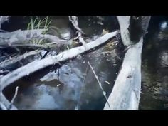Small Murray Cod Excitement - YouTube